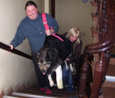 Hund Berri in seiner Tragetasche beim Treppensteigen