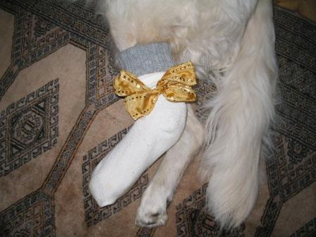 Golden Retriever Paul Froehlich/ Socken