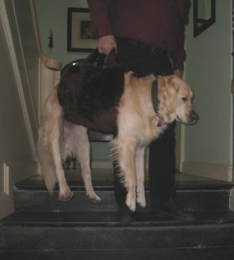 Hundetasche für Golden Retriever
